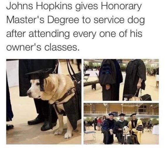 dog getting a degree for coming with its owner to every class