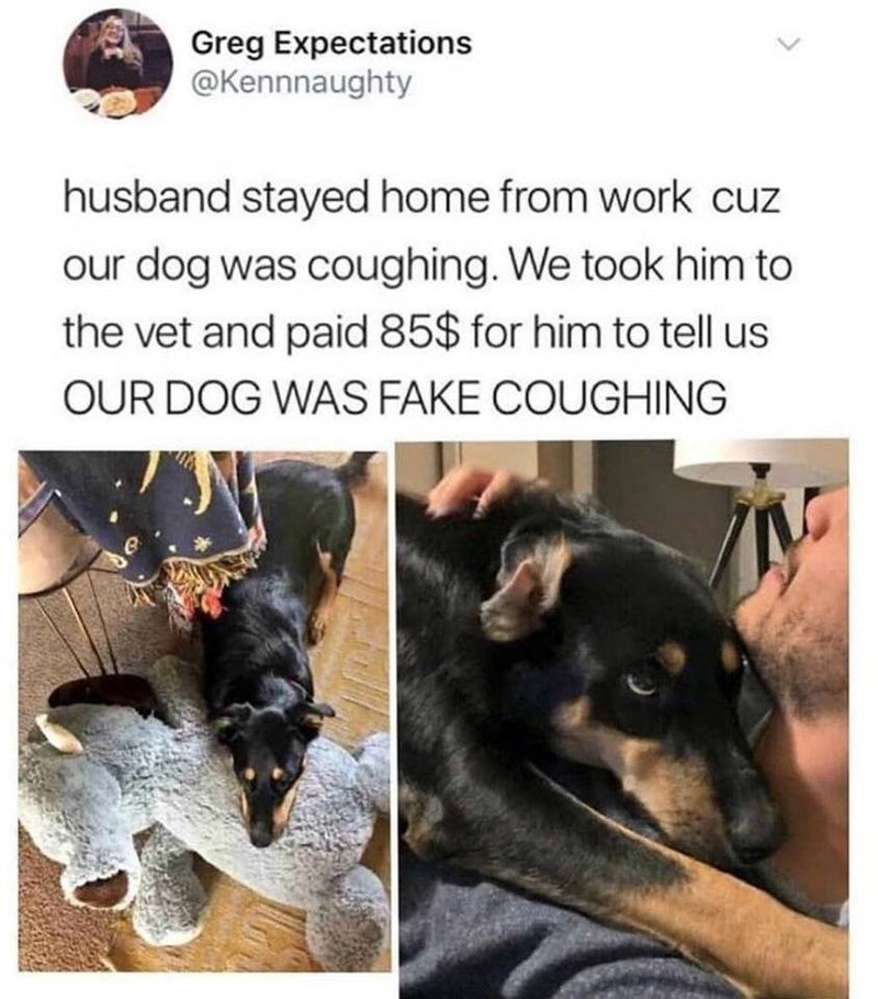 post about a dog who pretended he was sick