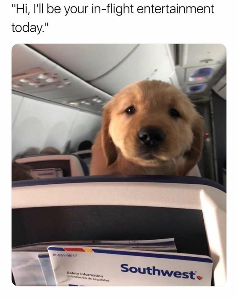 puppy looking overhead on a plane