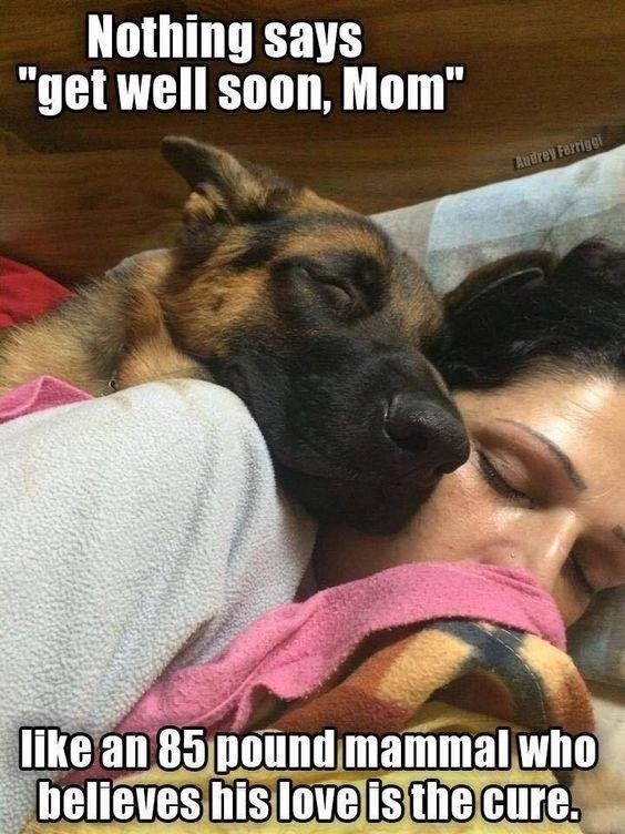 dog cuddling up next to its owner in bed