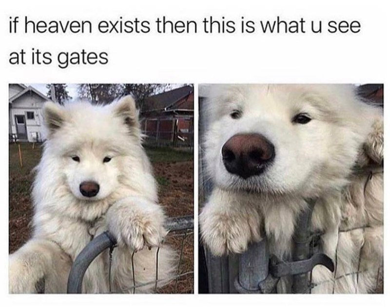 fluffy dog jumping over a gate