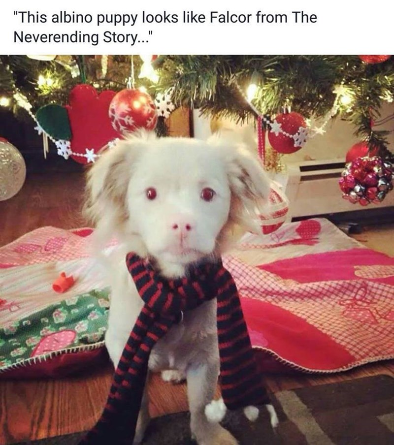 albino puppy standing next to a Christmas tree