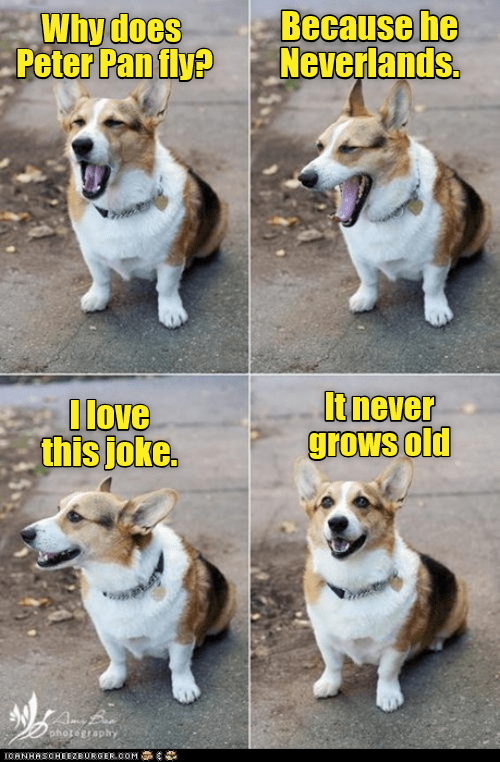 pic of a dog standing and yawning while telling a peter pan joke
