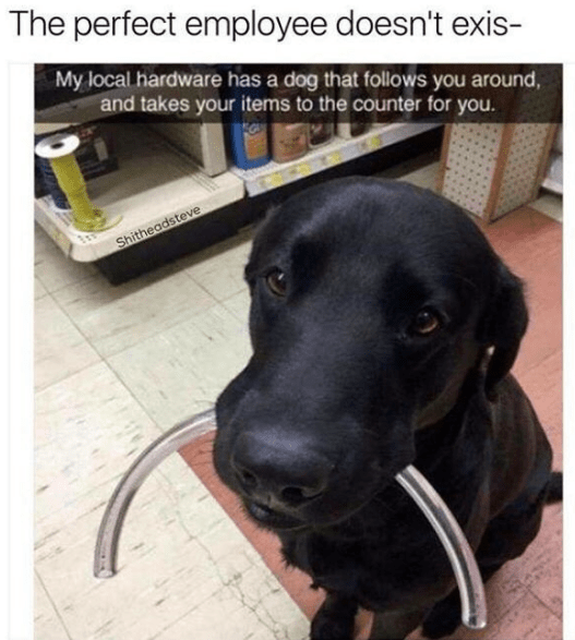 dog who helps out a hardware store by holding things in its mouth