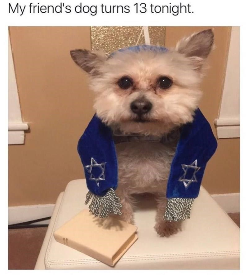 dog wearing a jewish scarf for its bar mitzvah