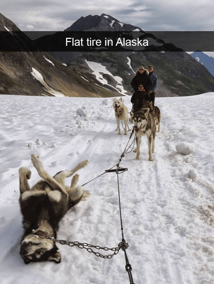 dogs sledding in snow and one dog is laying on its back in the middle of a mountain