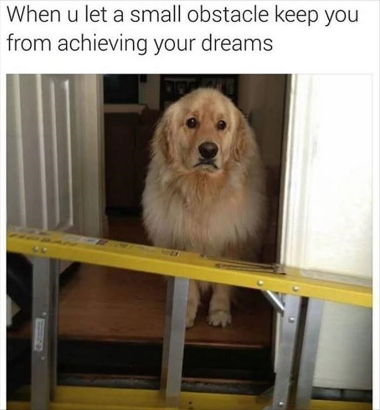 dog looking sad at the entrance because a ladder is blocking its path