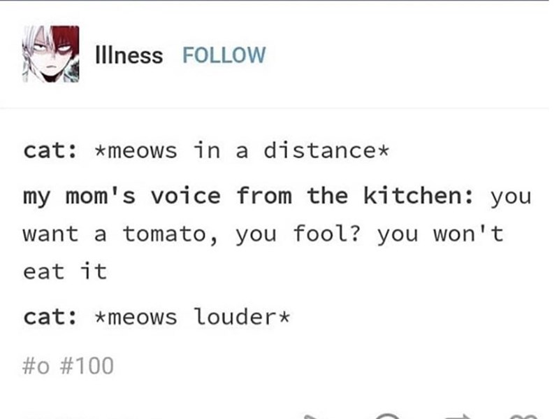 Tumblr post about overhearing conversation between human mother and cat