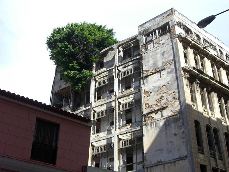 tree that grew and is covering a portion of a building