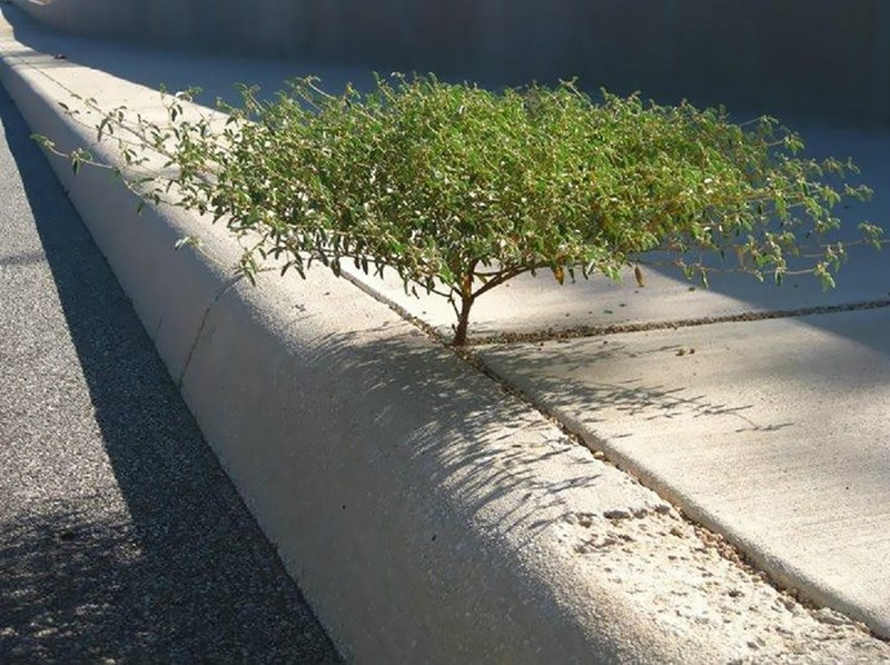 plant that grew between the cracks in a sidewalk