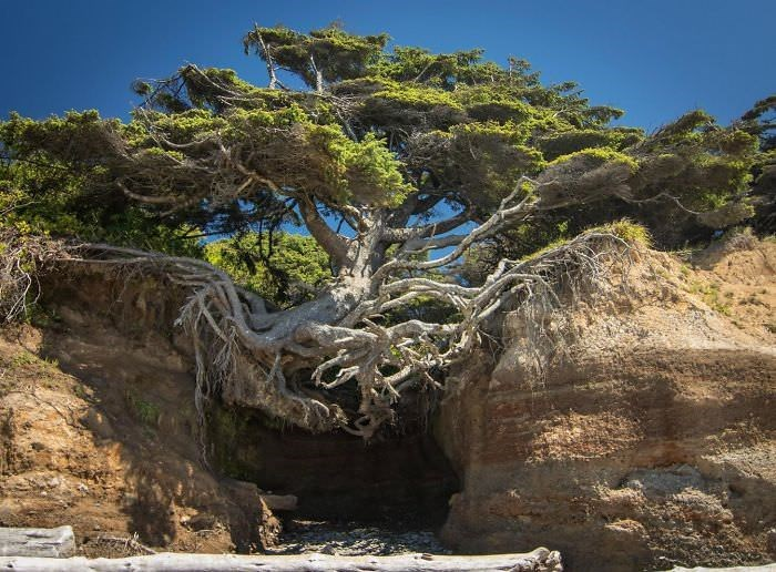 tree that is growing between rocks