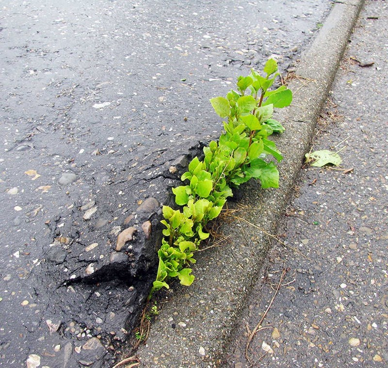 plant that grew and made cracks in the concrete