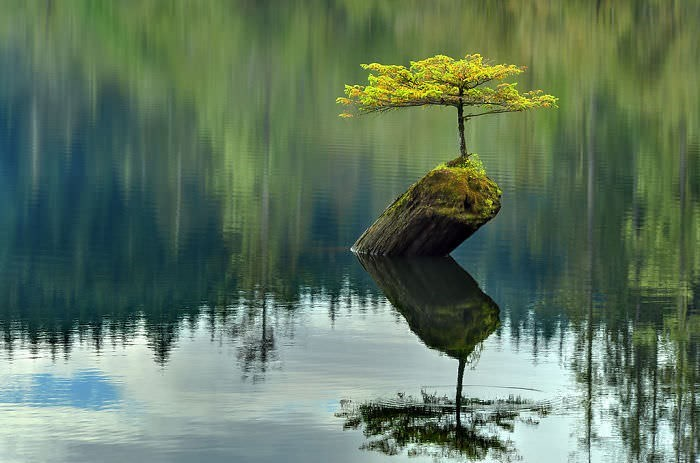 plant that grew on a stump in the middle of a lake