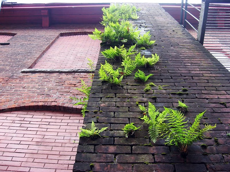 plant growing on a building in between the bricks