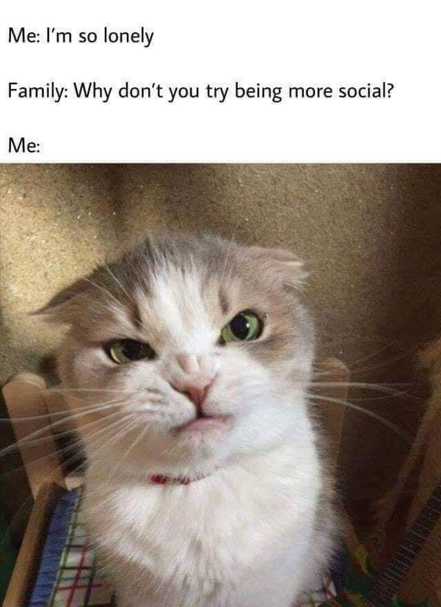 silly meme about being lonely but not wanting to talk to people with pic of angry cat