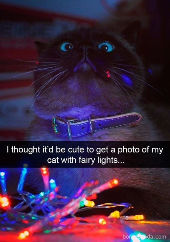 Cat - I thought it'd be cute to get a photo of my cat with fairy lights... bor da.com