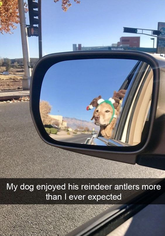 Rear-view mirror - VALEDO My dog enjoyed his reindeer antlers more than I ever expected