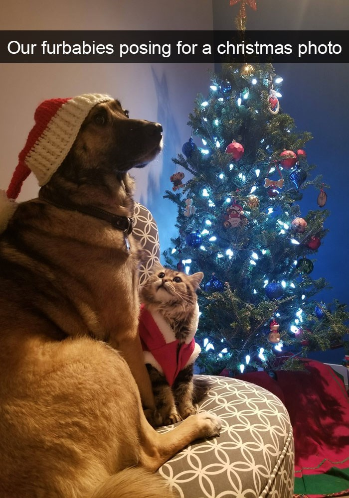 Dog - Our furbabies posing for a christmas photo