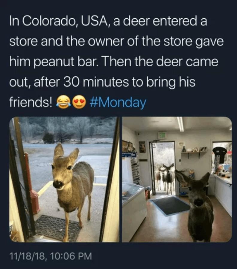 cute deer funny - 9247826688