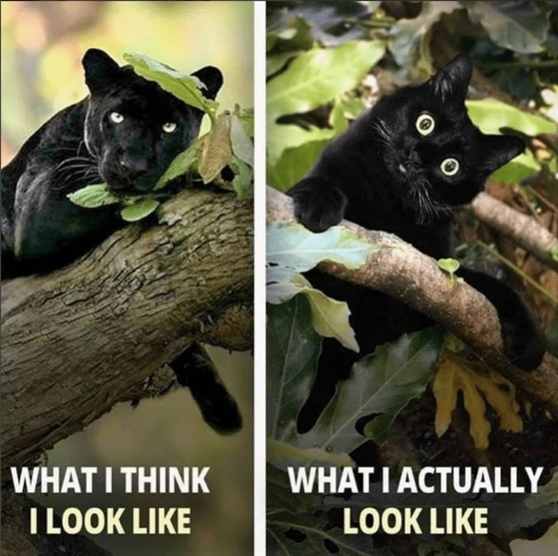 caturday meme about thinking of yourself as a panther but actually being a cute cat