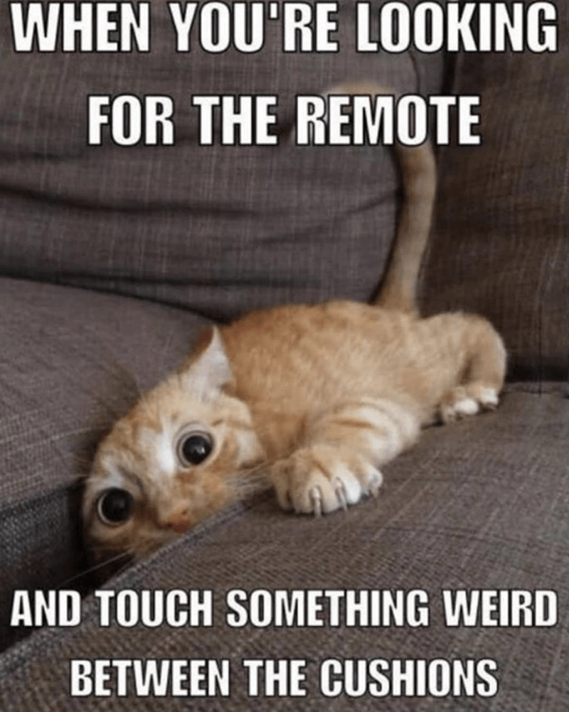 caturday meme about accidentally touching gross things with picture of cat reaching between the couch cushions
