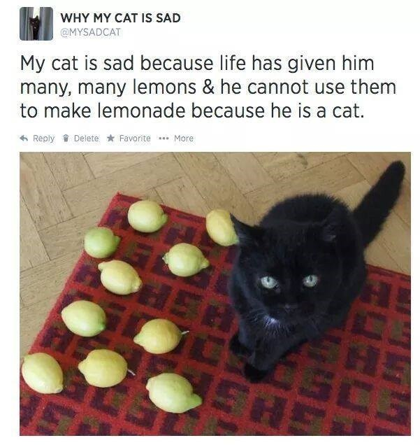 tweet about cat who can't make the most of what he's been handed with picture of cat surrounded by lemons