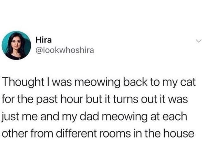 wholesome cute meow - 9247972352
