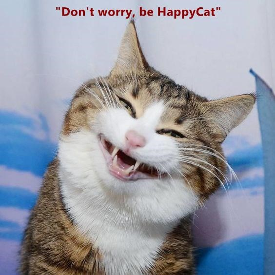 "Don't worry, be Happy Cat"" - Lolcats - lol 