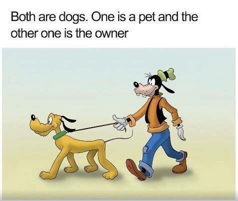 meme pointing out how Goofy is a dog standing upright and wearing clothes while Pluto is treated as an actual dog