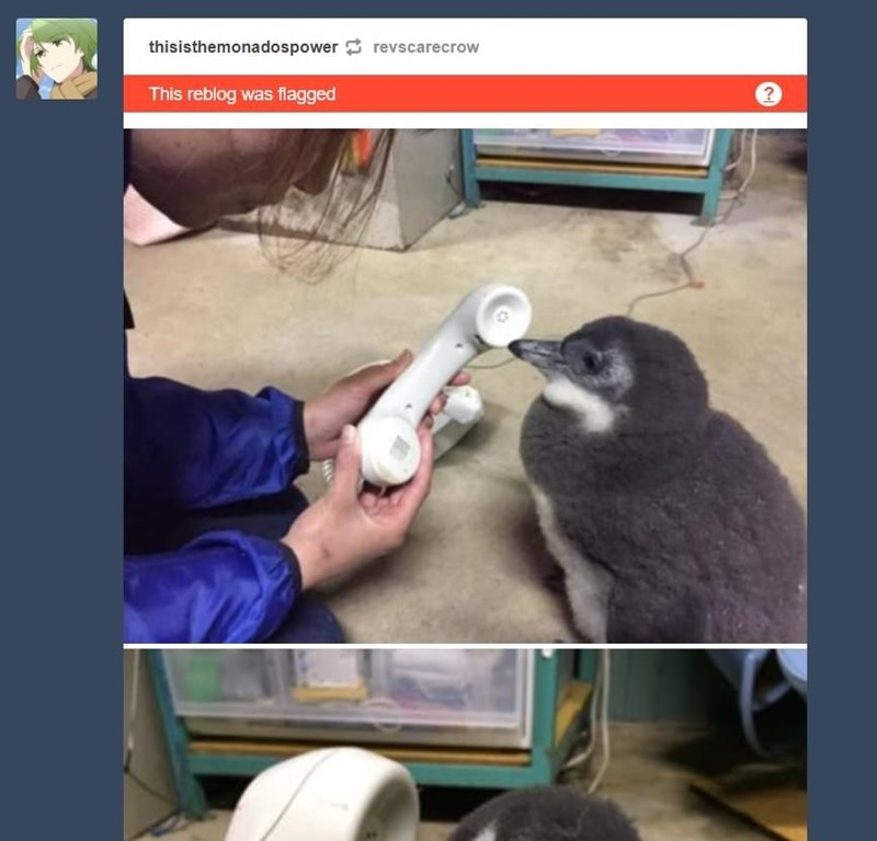 picture of baby penguin talking on the phone flagged as explicit on Tumblr