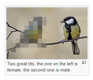 picture of female bird blurred parodying Tumblr's ban on female nudity