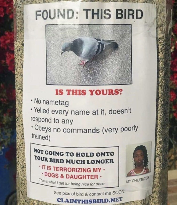 flyer about found pigeon