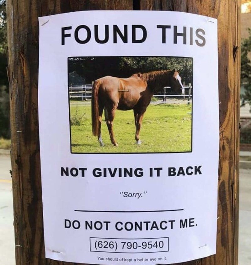 flyer for a found horse the poster doesn't want to return