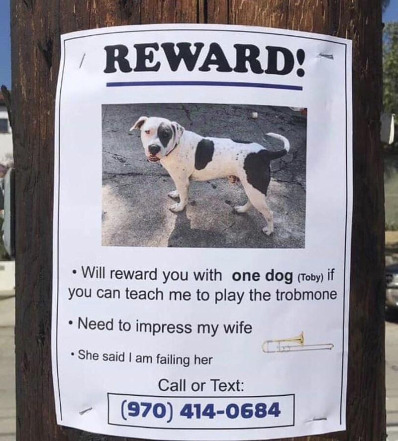 flyer asking to exchange of dog for trombone lessons