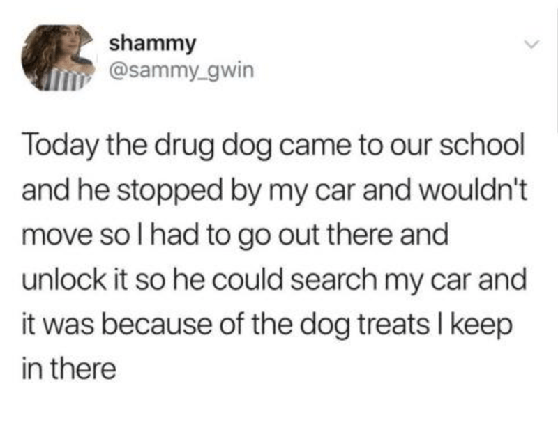 Text - shammy @sammy_gwin Today the drug dog came to our school and he stopped by my car and wouldn't move so I had to go out there and unlock it so he could search my car and it was because of the dog treats I keep in there