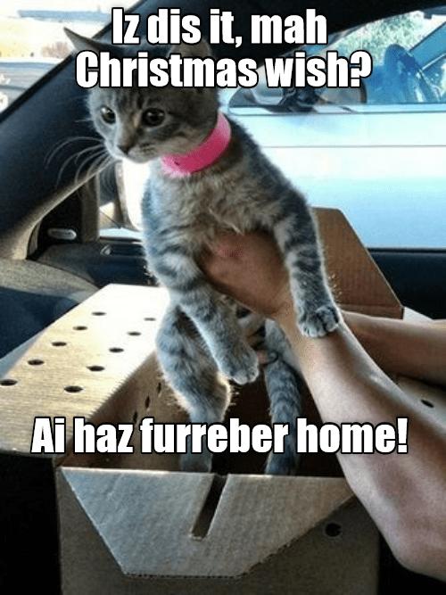 cat meme - Cat - 1zdis it, mah, Christmas wish? wwww. Ai haz furreber home!