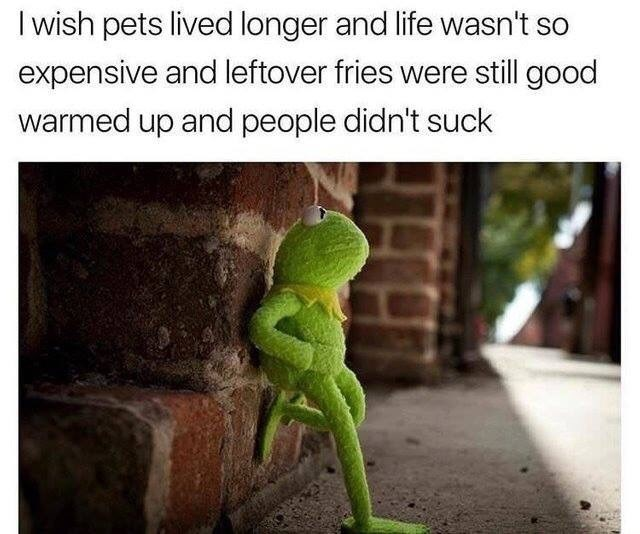 "Caption that reads, ""I wish pets lived longer and life wasn't so expensive and leftover fries were still good warmed up and people didn't suck"" above a pic of Kermit the Frog looking pensive standing against a wall"
