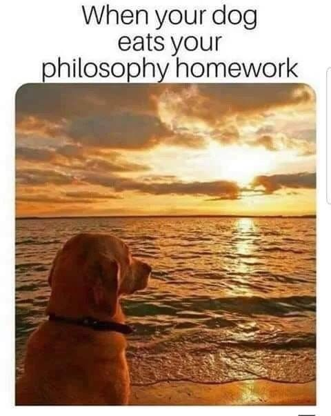 Canidae - When your dog eats your philosophy homework