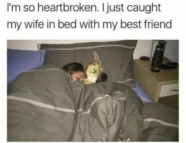 stupid but correct - Photo caption - I'm so heartbroken. Ijust caught my wife in bed with my best friend