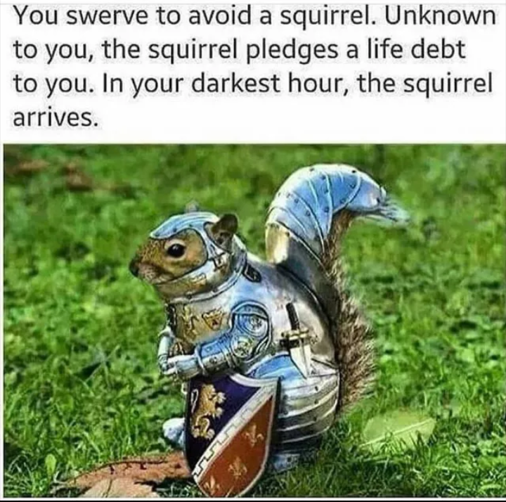 meme about knight squirrel pledging to serve you after you don't kill it