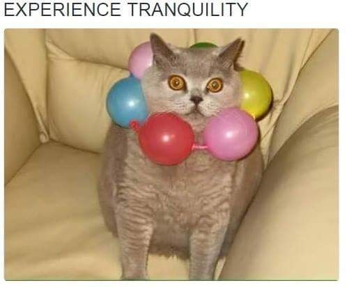 pic of cat wearing necklace made of beads and resembling Zenyatta from the game Overwatch