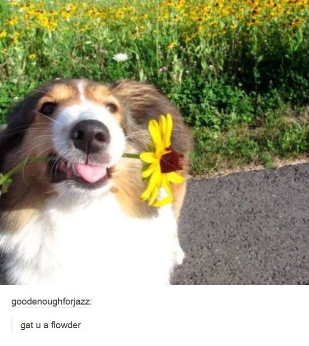 pic of dog holding a flower in its mouth