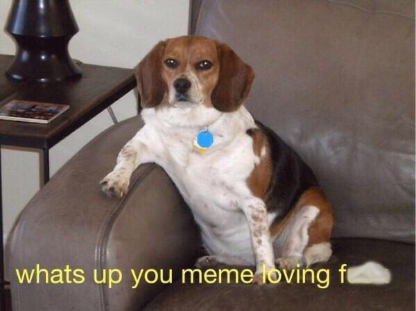 meme with pic of beagle dog sitting on a couch with its paw on the armrest