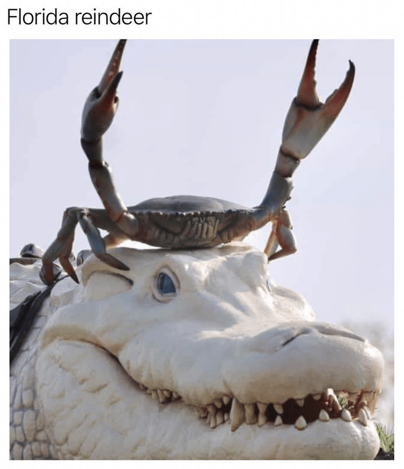 """Caption that reads, """"Florida reindeer"""" above a pic of a crab with its pincers up on top of an alligator"""