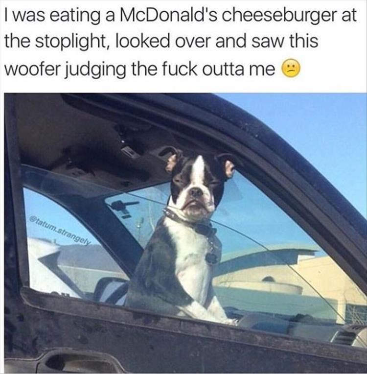 Meme about feeling judged for eating in your car with pic of dog squinting at the camera