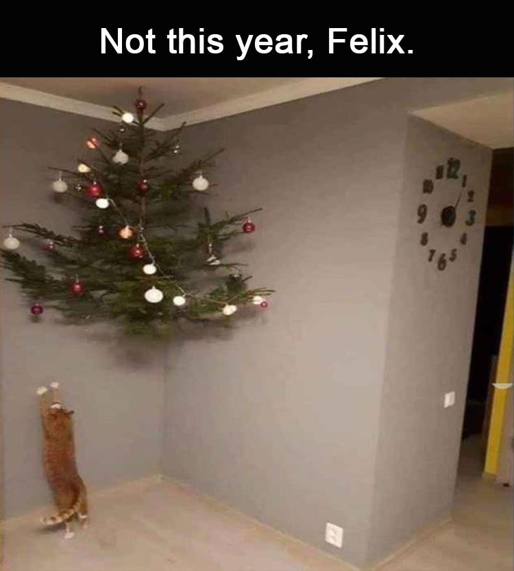 Meme about keeping the cat from destroying the Christmas tree with pic of tree suspended in air above the cat's reach