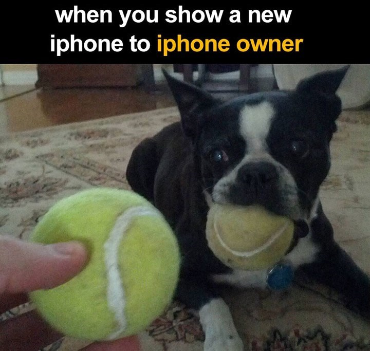 Meme about showing a fellow iPhone owner your new iPhone with pic of dog with battered tennis ball looking forlornly at newer tennis ball