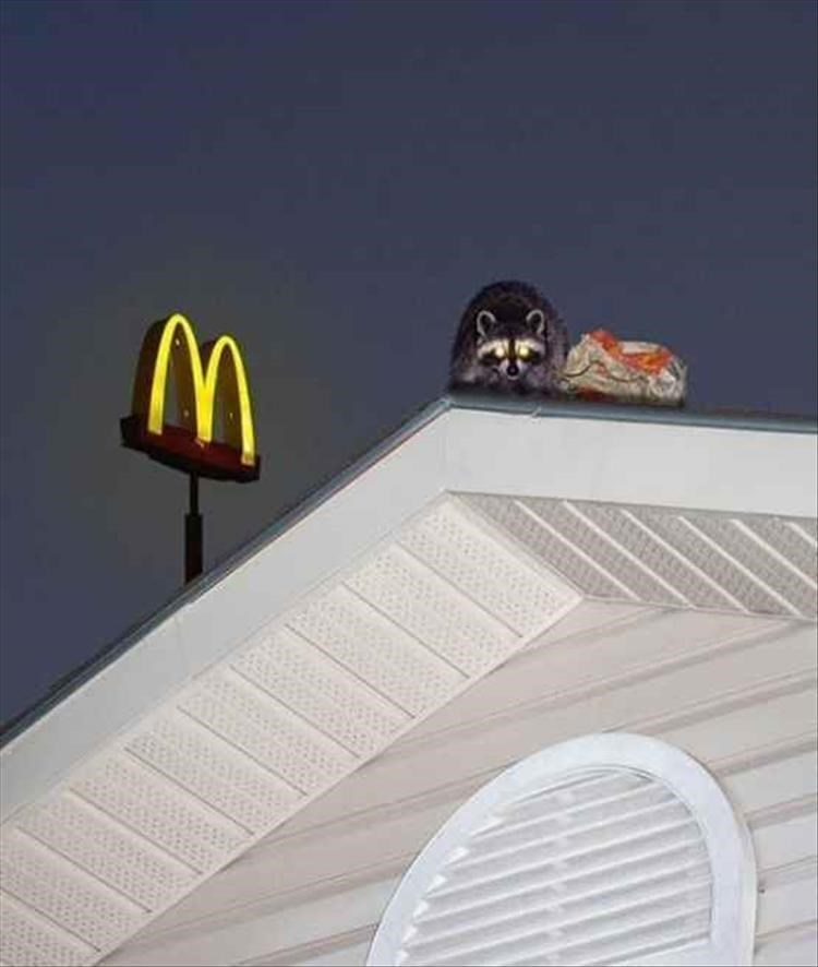 Cursed image of raccoon with glowing eyes watching from a rooftop with a McDonald's sign in the background