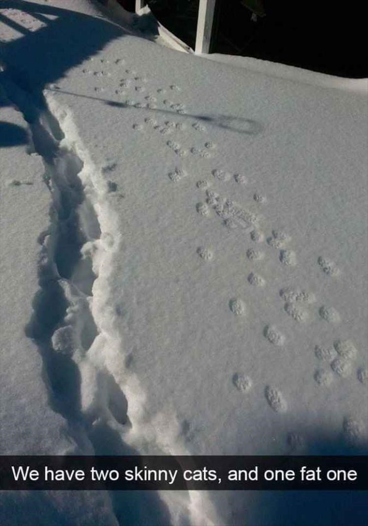 snapchat of 3 trails of footprints in snow, one belonging to an obviously fat cat
