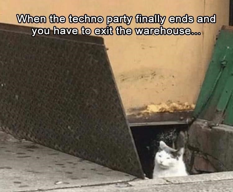 Meme about leaving a rave with pic of cat squinting as it looks out from a trash can
